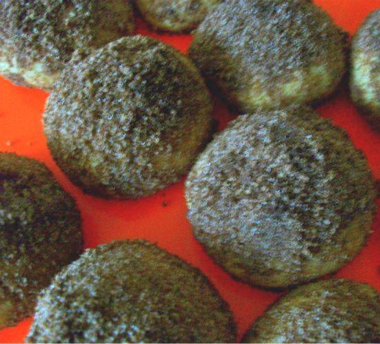 bisküvili kurabiye